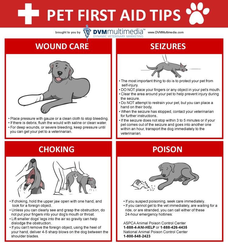 Image Result For Lv Pet Insurance