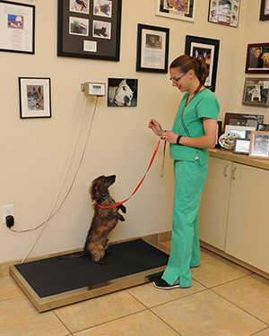 Las Vegas Veterinary Specialty Center